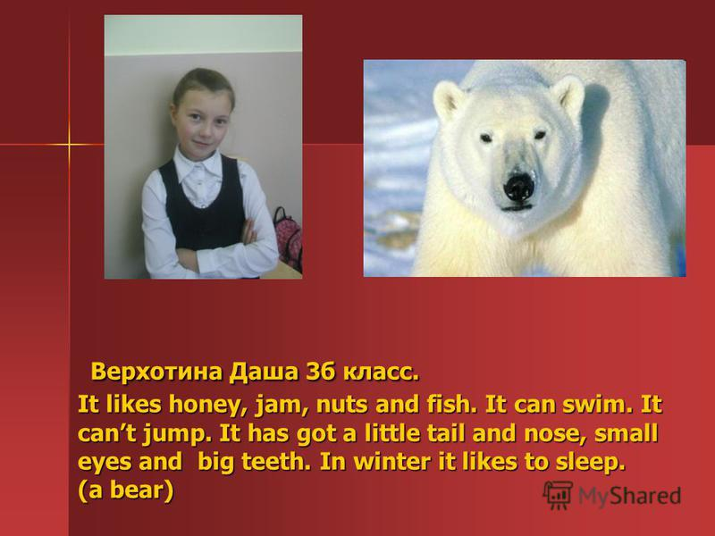 Верхотина Даша 3б класс. It likes honey, jam, nuts and fish. It can swim. It cant jump. It has got a little tail and nose, small eyes and big teeth. In winter it likes to sleep. (a bear) Верхотина Даша 3б класс. It likes honey, jam, nuts and fish. It