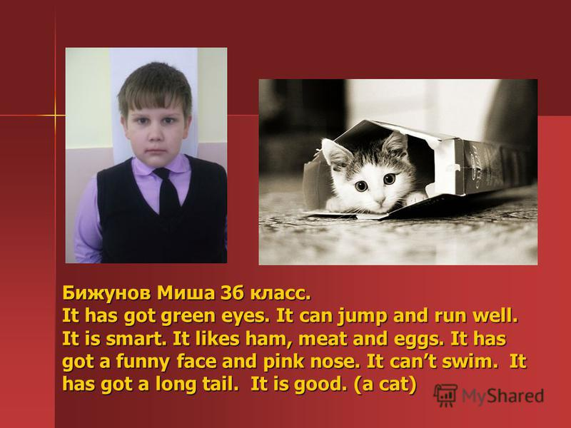 Бижунов Миша 3б класс. It has got green eyes. It can jump and run well. It is smart. It likes ham, meat and eggs. It has got a funny face and pink nose. It cant swim. It has got a long tail. It is good. (a cat)
