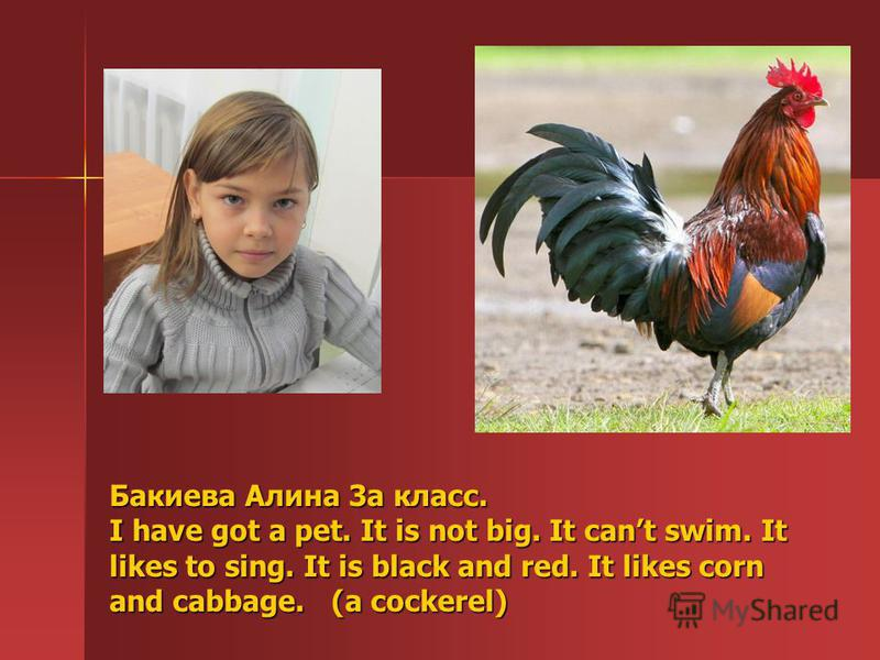 Бакиева Алина 3а класс. I have got a pet. It is not big. It cant swim. It likes to sing. It is black and red. It likes corn and cabbage. ( (a cockerel)