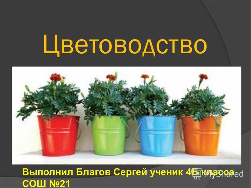 Цветоводство Выполнил Благов Сергей ученик 4Б класса СОШ 21