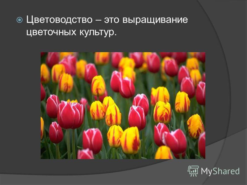 Цветоводство – это выращивание цветочных культур.