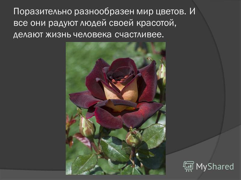 Поразительно разнообразен мир цветов. И все они радуют людей своей красотой, делают жизнь человека счастливее.