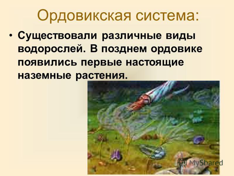 Ордовикская система: Существовали различные виды водорослей. В позднем ордовике появились первые настоящие наземные растения.