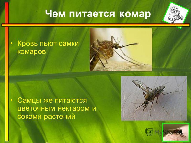 Строение комара тело покрыто чешуйками на голове фасеточные глаза, пара усиков усики являются ушами и носами игловидный колющий хоботок – жало дышит через дыхательные трубочки одна пара крыльев три пары длинных тонких ног