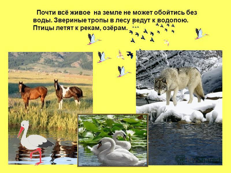 Почти всё живое на земле не может обойтись без воды. Звериные тропы в лесу ведут к водопою. Птицы летят к рекам, озёрам.