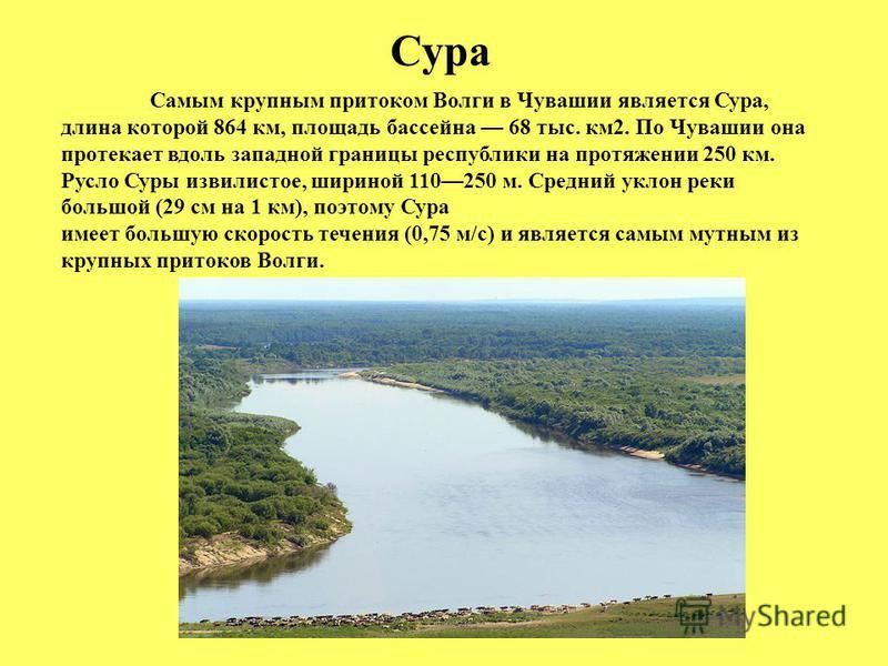 Сура Самым крупным притоком Волги в Чувашии является Сура, длина которой 864 км, площадь бассейна 68 тыс. км 2. По Чувашии она протекает вдоль западной границы республики на протяжении 250 км. Русло Суры извилистое, шириной 110250 м. Средний уклон ре