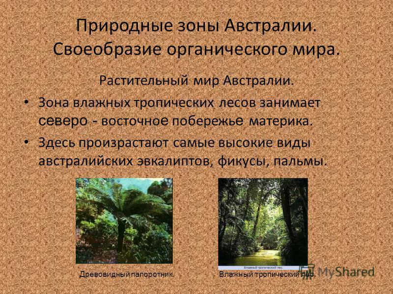 Природные зоны Австралии. Своеобразие органического мира. Растительный мир Австралии. Зона влажных тропических лесов занимает северо - восточное побережье материка. Здесь произрастают самые высокие виды австралийских эвкалиптов, фикусы, пальмы. Влажн