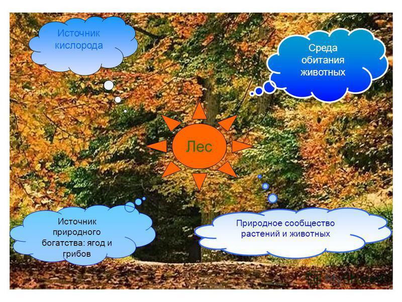 Лес Источник кислорода Среда обитания животных Природное сообщество растений и животных Источник природного богатства: ягод и грибов