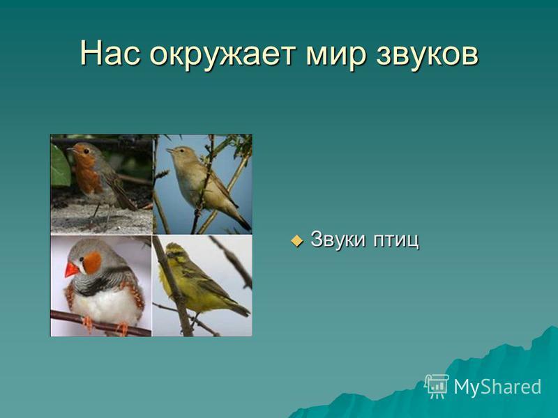 Нас окружает мир звуков Звуки птиц Звуки птиц