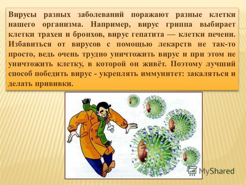 Вирусы разных заболеваний поражают разные клетки нашего организма. Например, вирус гриппа выбирает клетки трахеи и бронхов, вирус гепатита клетки печени. Избавиться от вирусов с помощью лекарств не так-то просто, ведь очень трудно уничтожить вирус и