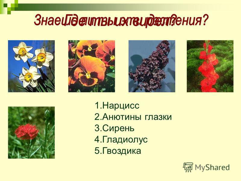 1. Нарцисс 2. Анютины глазки 3. Сирень 4. Гладиолус 5.Гвоздика
