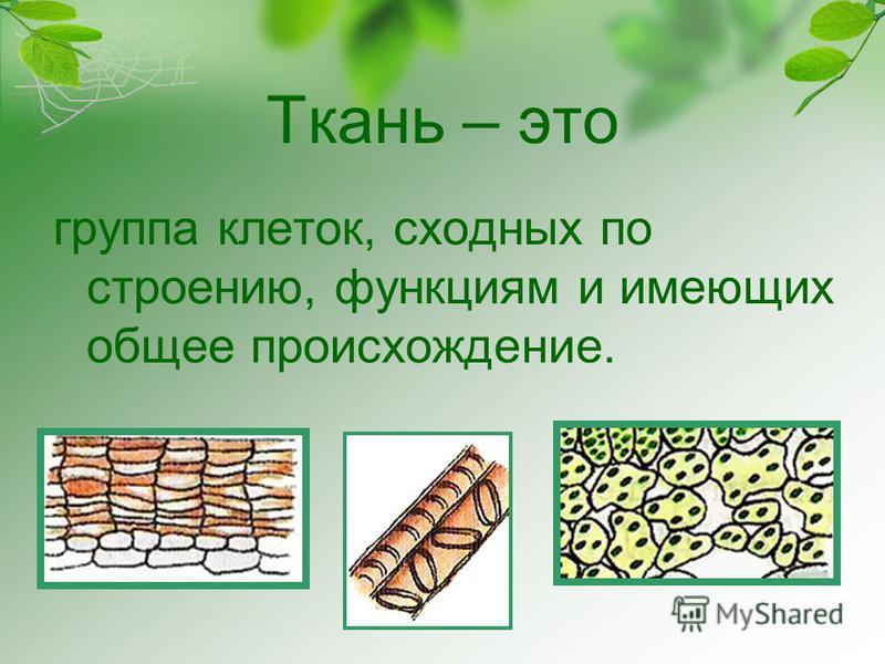Ткань – это группа клеток, сходных по строению, функциям и имеющих общее происхождение.