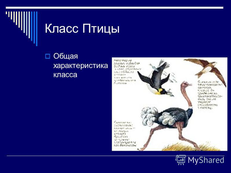 Презентация по биологии 7 класс класс рептилии