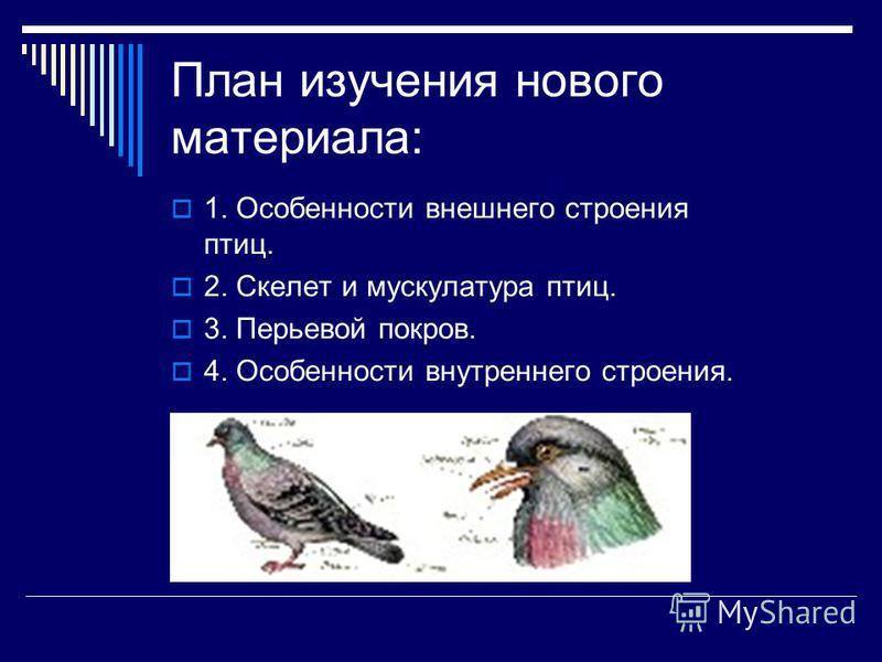 План изучения нового материала: 1. Особенности внешнего строения птиц. 2. Скелет и мускулатура птиц. 3. Перьевой покров. 4. Особенности внутреннего строения.