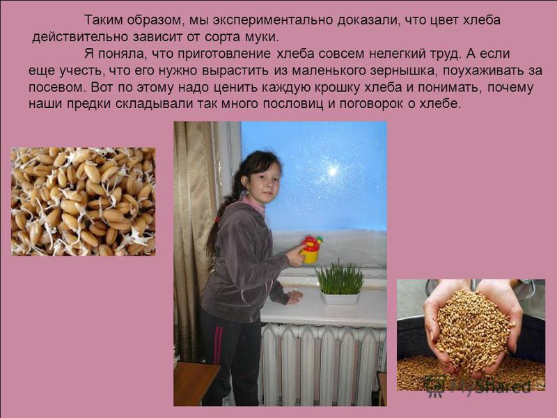 Таким образом, мы экспериментально доказали, что цвет хлеба действительно зависит от сорта муки. Я поняла, что приготовление хлеба совсем нелегкий труд. А если еще учесть, что его нужно вырастить из маленького зернышка, поухаживать за посевом. Вот по