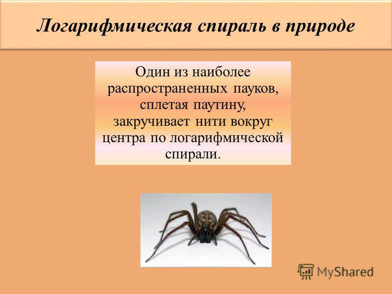 Логарифмическая спираль в природе Один из наиболее распространенных пауков, сплетая паутину, закручивает нити вокруг центра по логарифмической спирали.