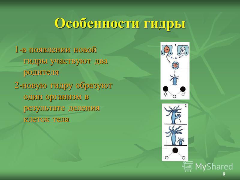 Особенности гидры 1-в появлении новой гидры участвуют два родителя 2-новую гидру образуют один организм в результате деления клеток тела 8