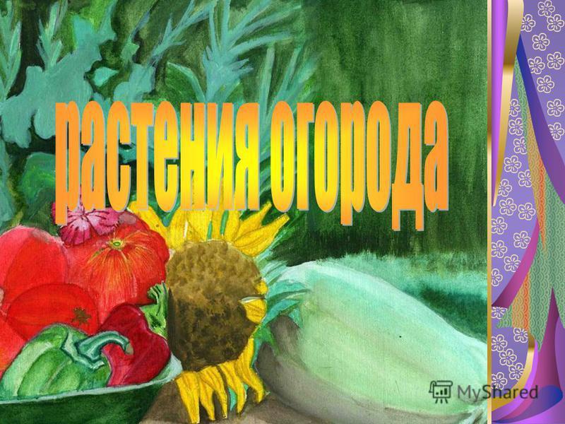 Растения огорода Турбабина Надежда Михайловна Уральская СОШ Кваркенский район Оренбургская область