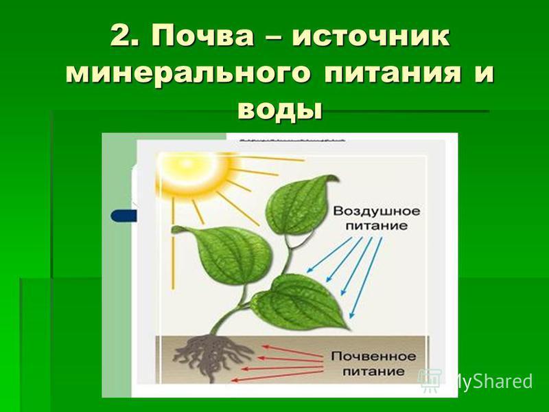 2. Почва – источник минерального питания и воды