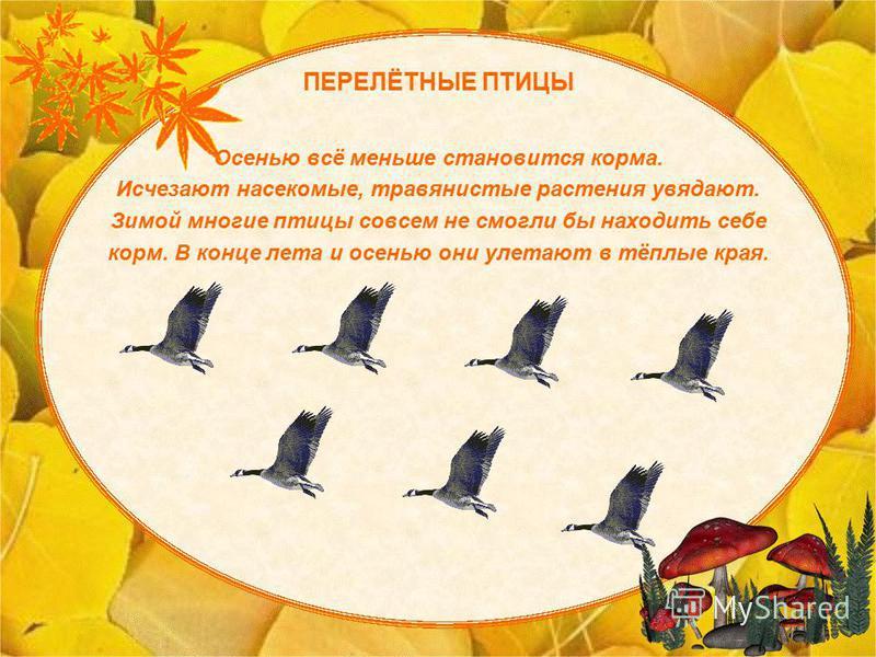 осени перелетные птицы картинки