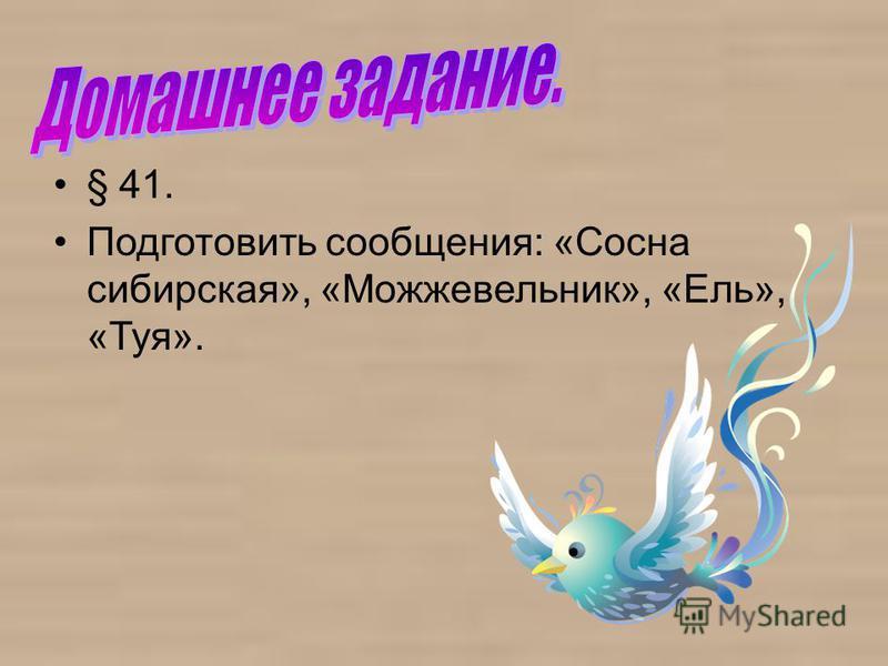 § 41. Подготовить сообщения: «Сосна сибирская», «Можжевельник», «Ель», «Туя».