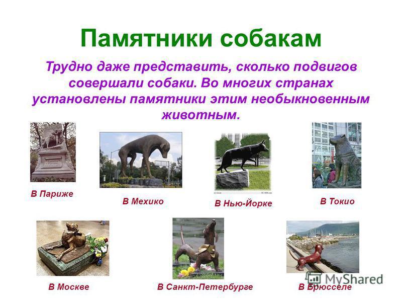 Памятники собакам Трудно даже представить, сколько подвигов совершали собаки. Во многих странах установлены памятники этим необыкновенным животным. В Париже В Мехико В Нью-Йорке В Токио В МосквеВ БрюсселеВ Санкт-Петербурге