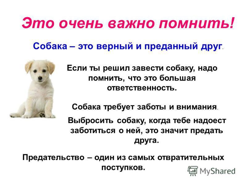 Это очень важно помнить! Собака – это верный и преданный друг. Если ты решил завести собаку, надо помнить, что это большая ответственность. Собака требует заботы и внимания. Выбросить собаку, когда тебе надоест заботиться о ней, это значит предать др