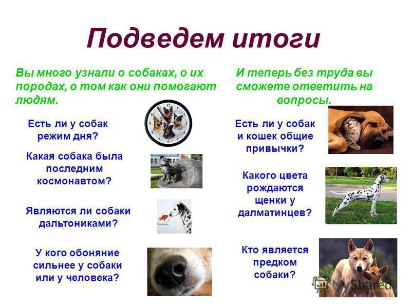 Подведем итоги Вы много узнали о собаках, о их породах, о том как они помогают людям. И теперь без труда вы сможете ответить на вопросы. Есть ли у собак режим дня? Какая собака была последним космонавтом? Являются ли собаки дальтониками? Есть ли у со