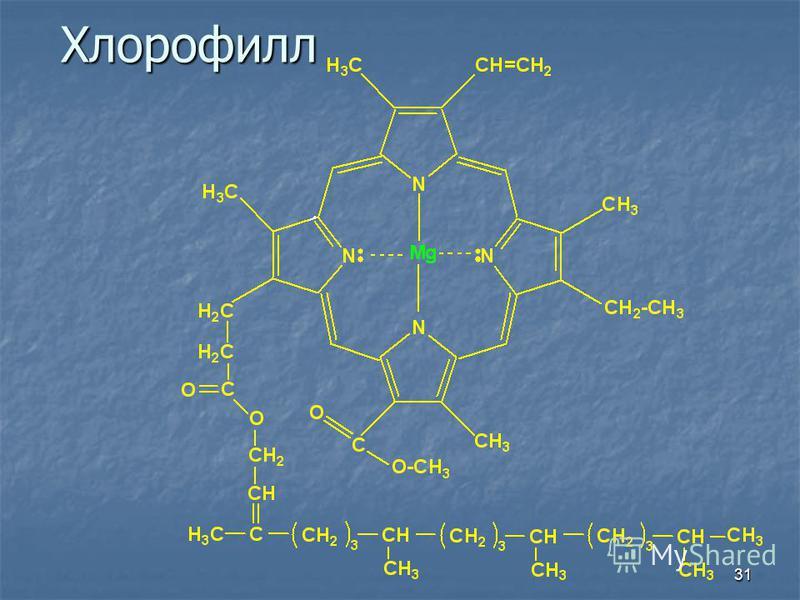 31Хлорофилл