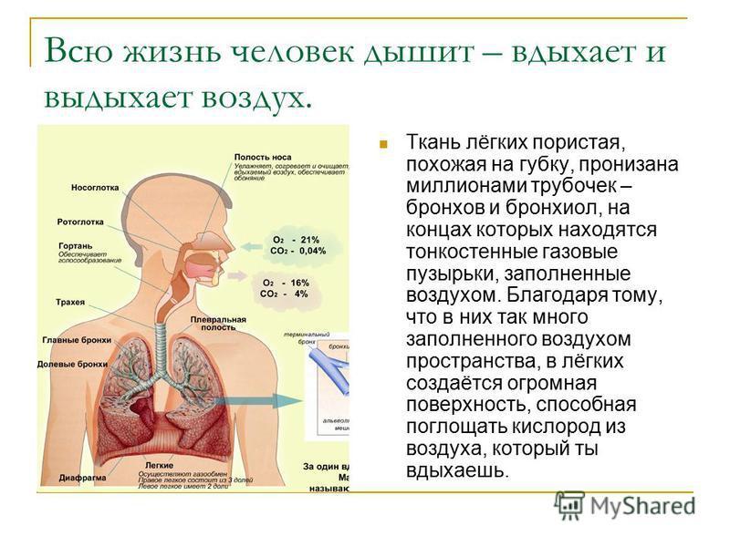 Сообщение о лёгких 3 класс