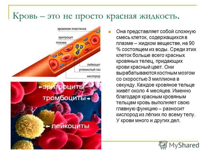 Кровь – это не просто красная жидкость. Она представляет собой сложную смесь клеток, содержащихся в плазме – жидком веществе, на 90 % состоящем из воды. Среди этих клеток больше всего красных кровяных телец, придающих крови красный цвет. Они вырабаты