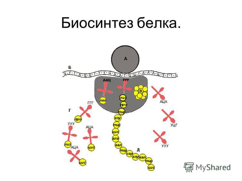 «Жизнь – есть способ существования белковых тел, существенным моментом которого является обмен веществ с окружающей их природой, причем с прекращением этого обмена веществ прекращается и жизнь, что приводит к разложению белков». Ф.Энгельс. «Живые тел