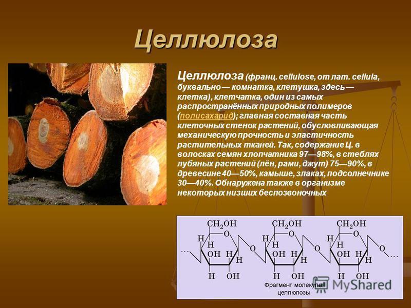 Целлюлоза Целлюлоза (франц. cellulose, от лат. cellula, буквально комнатка, клетушка, здесь клетка), клетчатка, один из самых распространённых природных полимеров (полисахарид); главная составная часть клеточных стенок растений, обусловливающая механ