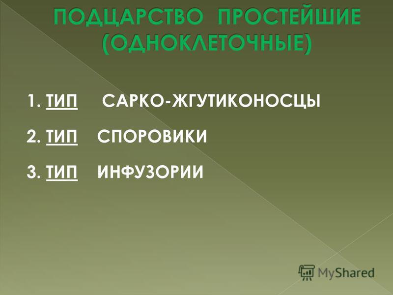 1. ТИП САРКО-ЖГУТИКОНОСЦЫ 2. ТИП СПОРОВИКИ 3. ТИП ИНФУЗОРИИ