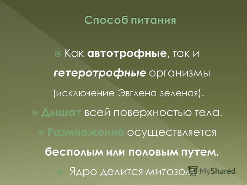 Как автотрофные, так и гетеротрофные организмы (исключение Эвглена зеленая). Дышат всей поверхностью тела. Размножение осуществляется бесполым или половым путем. Ядро делится митозом.