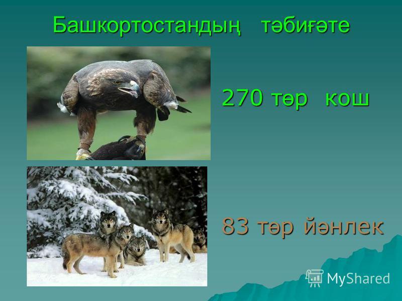 Башкортостандың т ә биғ ә те 270 т ө р кош 83 т ө р й ә нлек