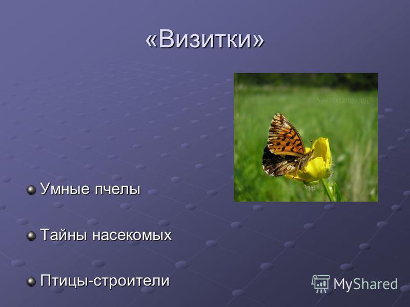 «Визитки» Умные пчелы Тайны насекомых Птицы-строители