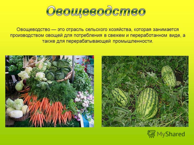 Овощеводетство это отрасль сельского хозяйства, которая занимается производетством овощей для потребления в свежем и переработанном виде, а также для перерабатывающей промышленности.