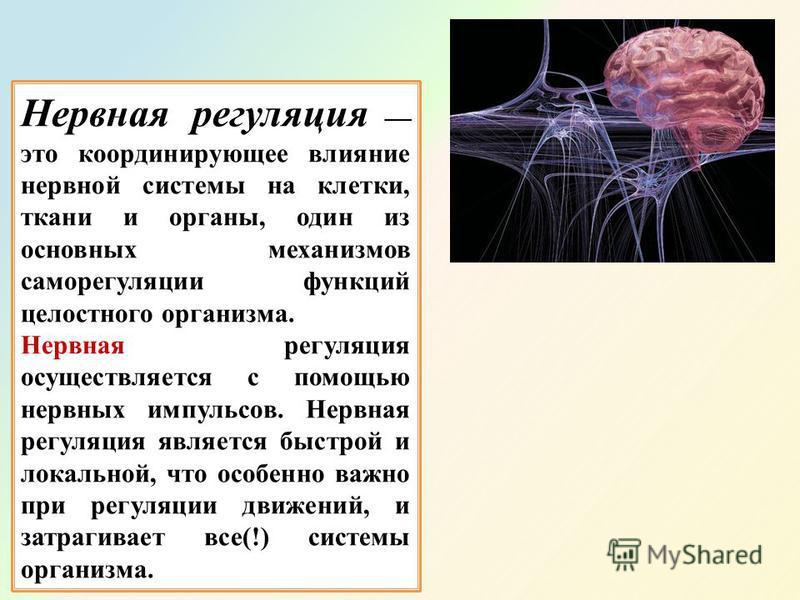 Нервная регуляция это координирующее влияние нервной системы на клетки, ткани и органы, один из основных механизмов саморегуляции функций целостного организма. Нервная регуляция осуществляется с помощью нервных импульсов. Нервная регуляция является б