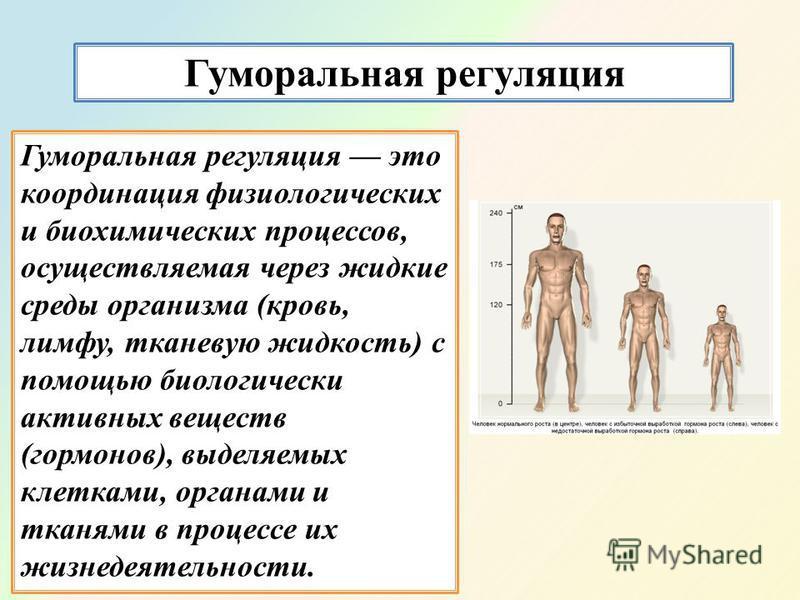 Гуморальная регуляция Гуморальная регуляция это координация физиологических и биохимических процессов, осуществляемая через жидкие среды организма (кровь, лимфу, тканевую жидкость) с помощью биологически активных веществ (гормонов), выделяемых клетка