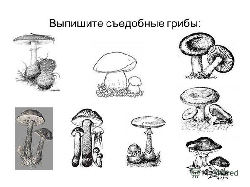 Выпишите съедобные грибы: