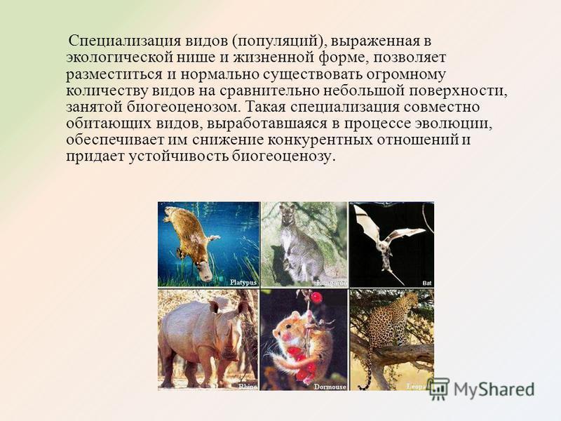 Специализация видов (популяций), выраженная в экологической нише и жизненной форме, позволяет разместиться и нормально существовать огромному количеству видов на сравнительно небольшой поверхности, занятой биогеоценозом. Такая специализация совместно