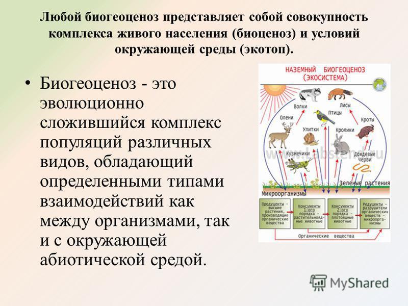 Любой биогеоценоз представляет собой совокупность комплекса живого населения (биоценоз) и условий окружающей среды (экотоп). Биогеоценоз - это эволюционно сложившийся комплекс популяций различных видов, обладающий определенными типами взаимодействий