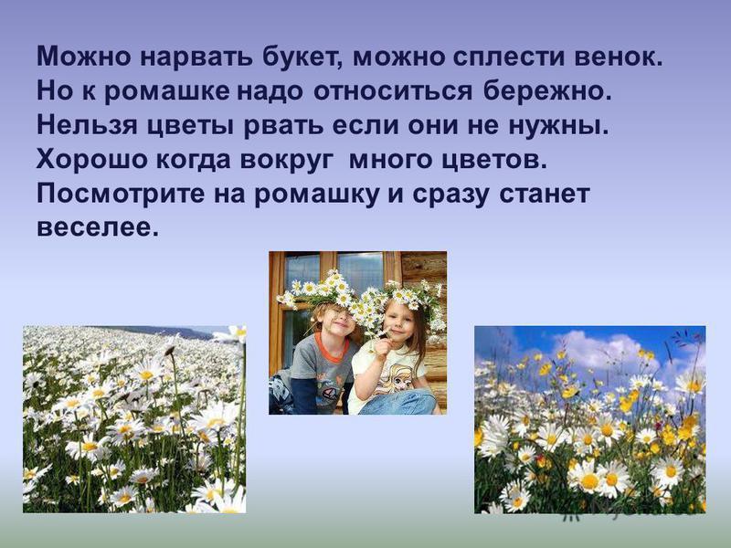 Можно нарвать букет, можно сплести венок. Но к ромашке надо относиться бережно. Нельзя цветы рвать если они не нужны. Хорошо когда вокруг много цветов. Посмотрите на ромашку и сразу станет веселее.