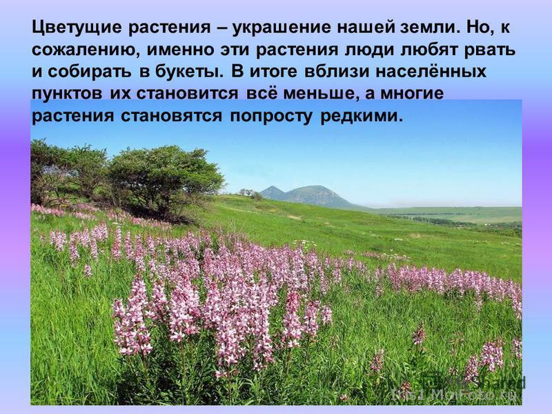 Цветущие растения – украшение нашей земли. Но, к сожалению, именно эти растения люди любят рвать и собирать в букеты. В итоге вблизи населённых пунктов их становится всё меньше, а многие растения становятся попросту редкими.