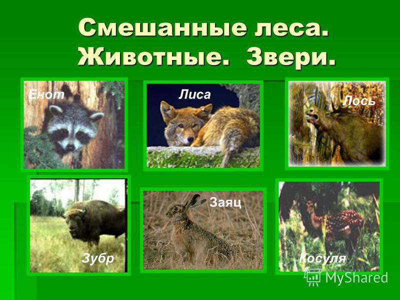 Смешанные леса. Животные. Звери. Смешанные леса. Животные. Звери. ЕнотЛиса Лось ЗубрКосуля Заяц