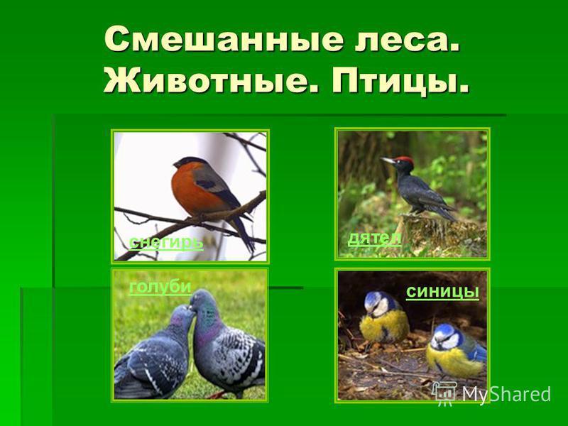 Смешанные леса. Животные. Птицы. Смешанные леса. Животные. Птицы. голуби дятел синицы снегирь