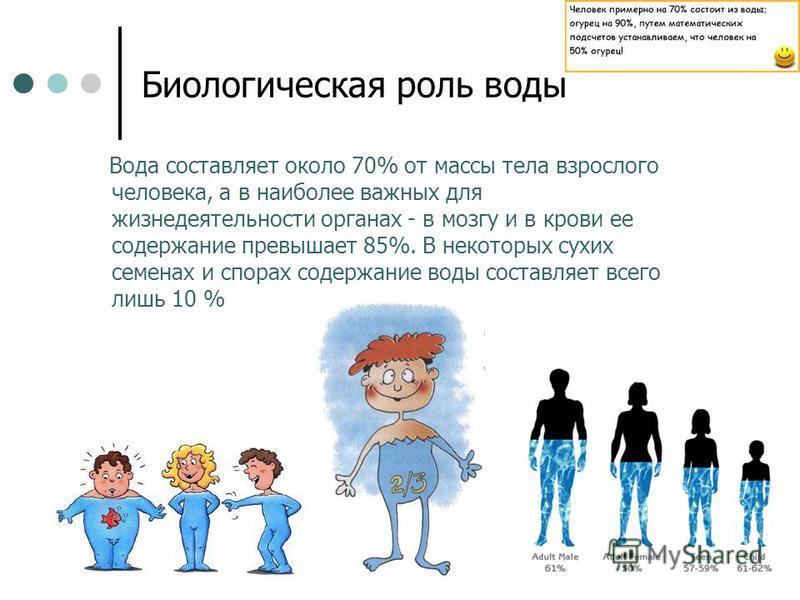 Биологическая роль воды Вода составляет около 70% от массы тела взрослого человека, а в наиболее важных для жизнедеятельности органах - в мозгу и в крови ее содержание превышает 85%. В некоторых сухих семенах и спорах содержание воды составляет всего