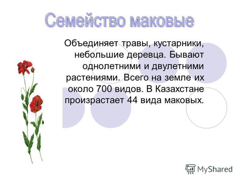 Объединяет травы, кустарники, небольшие деревца. Бывают однолетними и двулетними растениями. Всего на земле их около 700 видов. В Казахстане произрастает 44 вида маковых.