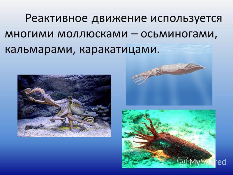 Реактивное движение используется многими моллюсками – осьминогами, кальмарами, каракатицами.